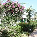jardins fleuris de l'hotel