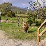 casa rural en candeleda ropino