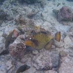 Taken using the dive school underwater camera