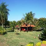 gardens and hamocks