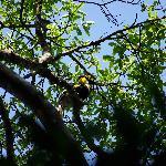 Hornbills are easily found.
