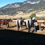 Julie getting the horses ready
