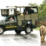 Open vehicle Safari in the Kruger with Sabie River Bush Lodge