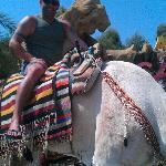 camel at medina