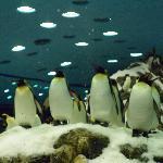 lovely pinguins
