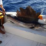 30 lb sailfish caught with Olympus tours Deep Sea Fishing Excursion