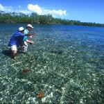 Starfish while wading for permit