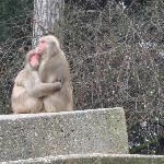 Loving monkies