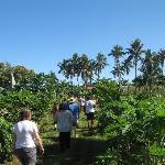 Tour of the farm