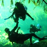 diving in the cenotes