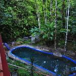 Pool and rainforest