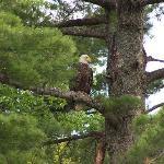 Bald Eagle. Taken while boating on the lake.