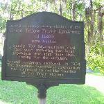 Yellow fever marker