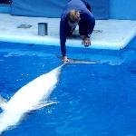 delfin de espalditas!!