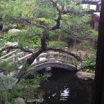 部屋のすぐ外は池。松もきれい