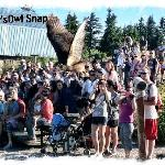 Jay captures a mid flight Owl at the Grouse Mtn Raptor Show