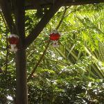 jardin de colibris