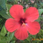 flora del jardin