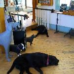 Labs at Dog Mountain