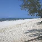 Diani Beach from garden
