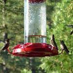 Kolibris an der Terrasse