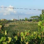a walk in the vinyard
