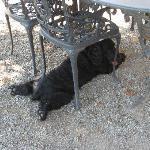 2軒目のワイナリーの犬。
