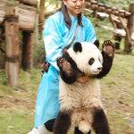 More vicious panda shots...