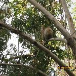 koala center