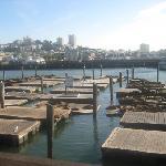 Sealions off Pier 39.