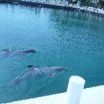 Dolphins next door