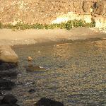 Pequeña playa al lado del hotel Riu Buenavista