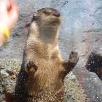 Curious otter!