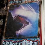 Entering the Shark Attack room