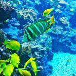pretty fish
