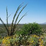 Saguaro National Park-East