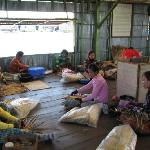 Co-op women making baskets from dried water hyacinth