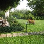 Garden with breakfast table