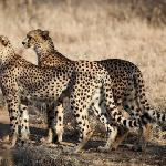 One of the many great sights you will experience on a game drive at Garonga