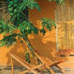 Relax under the papaya tree