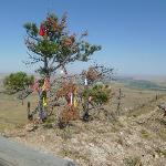 tree with native american offerings