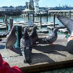 birds pier 39