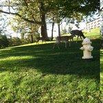 free roaming deer on property