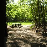 Wooded and gassy picnic area with barbque options