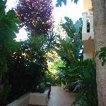 Frideriki's garden