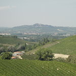 A View of the Piedmont Region Vineyards