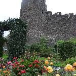 The garden beside the town wall at Bryn