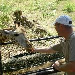 Feeding Giraffes at Haller Park