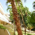 Más jardines del hotel...x ahí es una de las entrads a las habitaciones sin pasar x el lobby