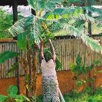 Banana tree at Barbara's village